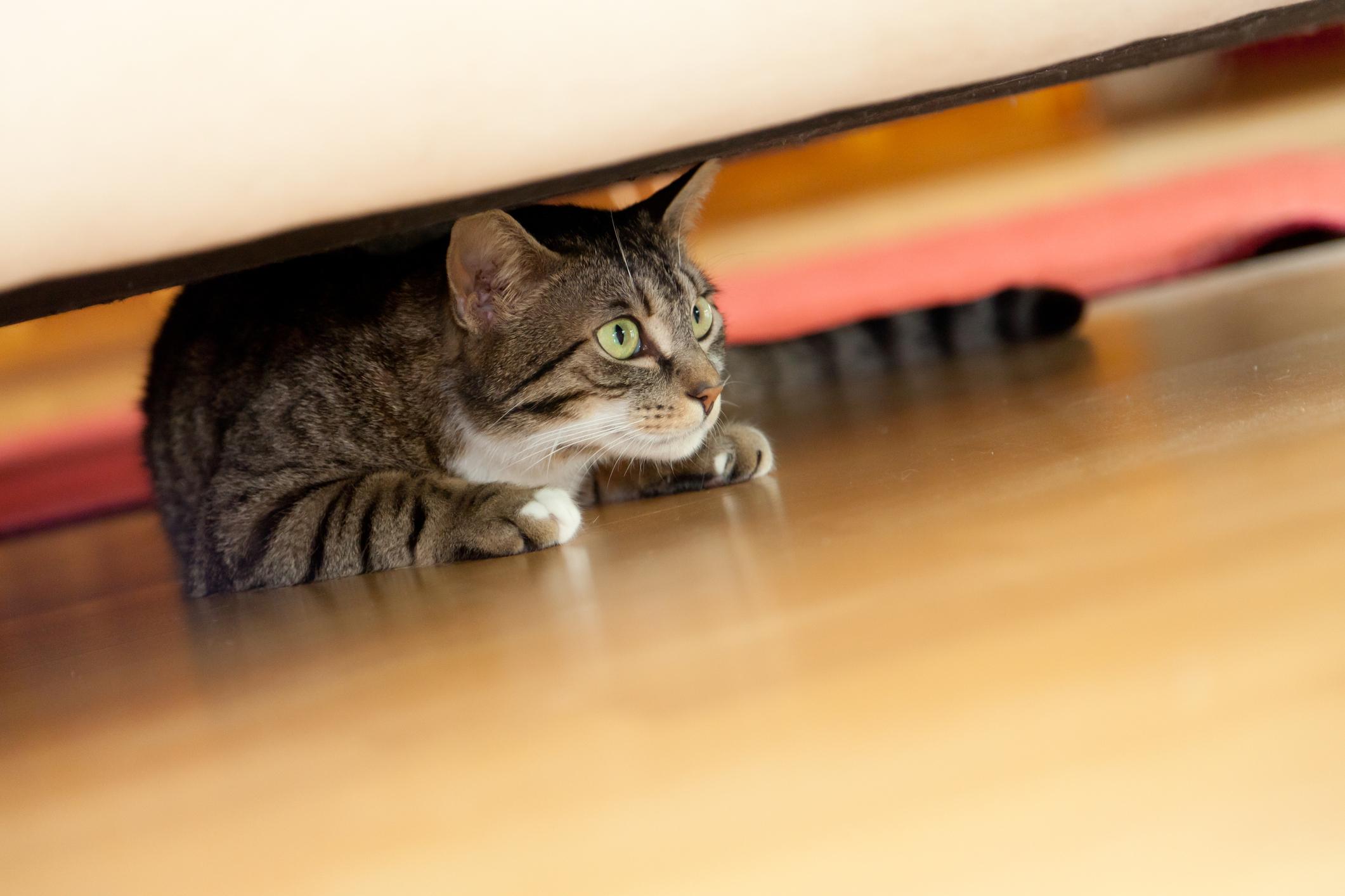 4 Dinge, die Stress und Angst in einer Katze auslösen