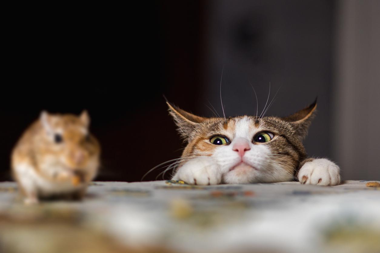 Warum Katzen Mäuse fangen