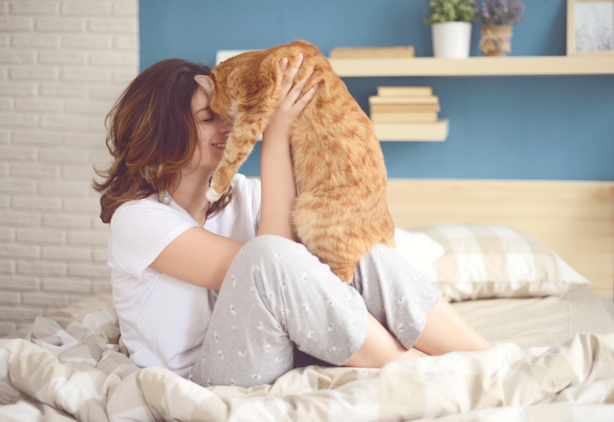 Warum ein Katzenjunges nicht im Bett des Besitzers schlafen sollte