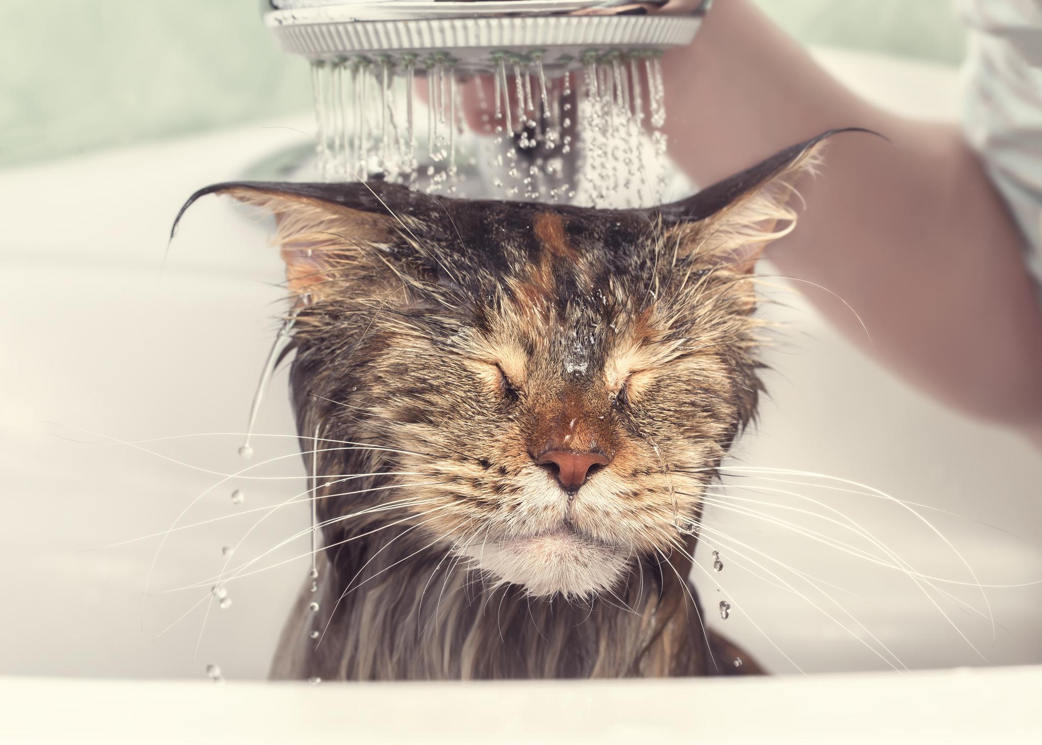 Ob und wie man eine Katze badet