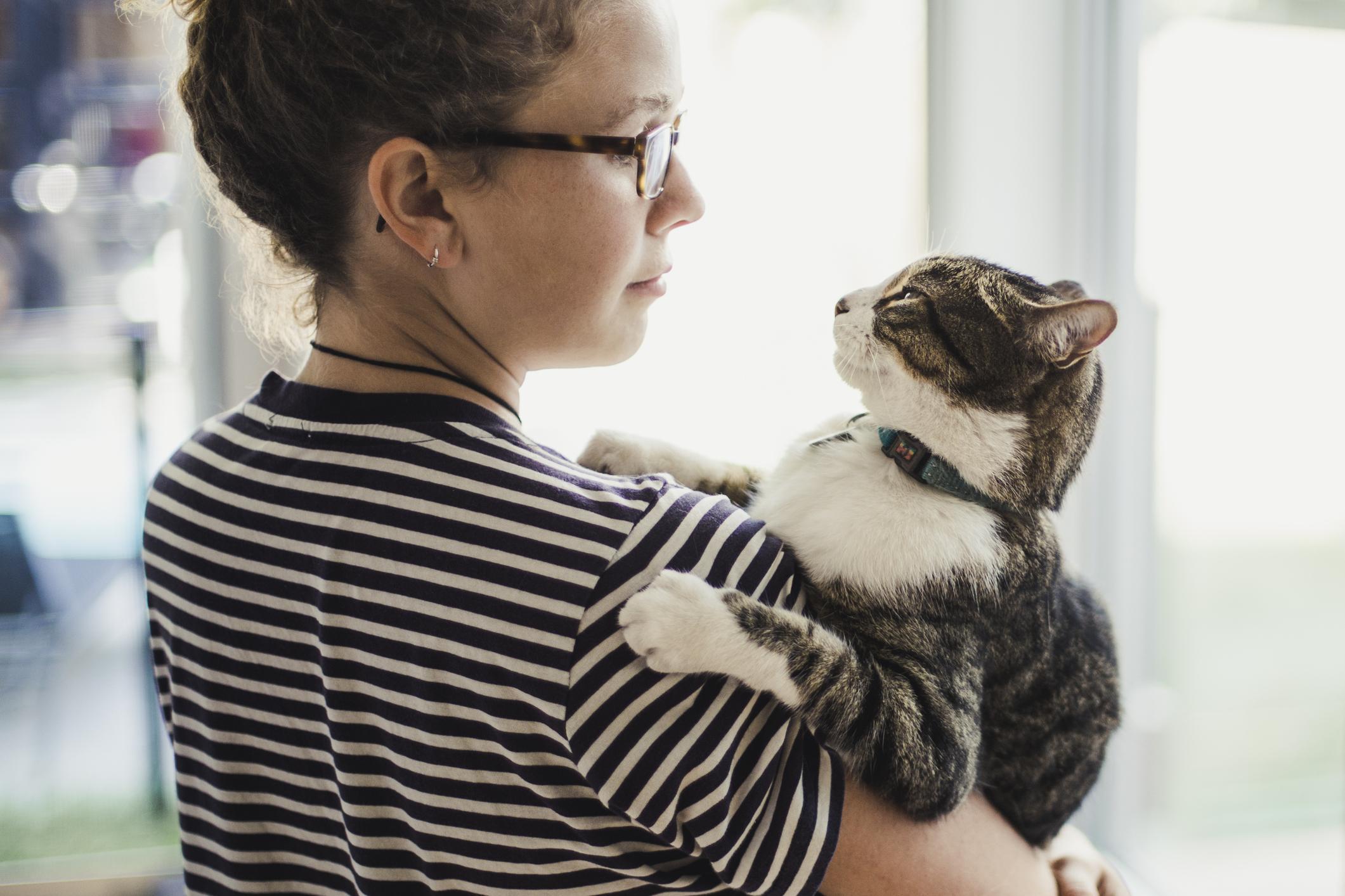 Wie man ein besserer Katzenbesitzer wird