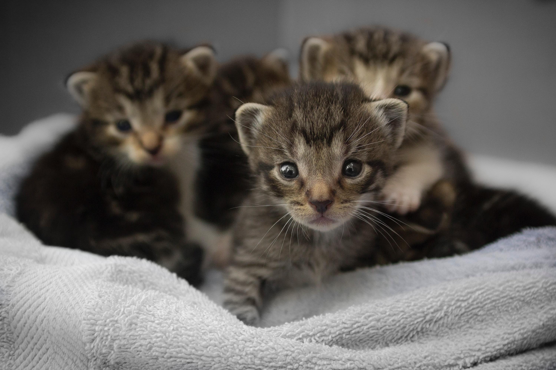 Kleine Kinder und Katzen – was zu beachten ist